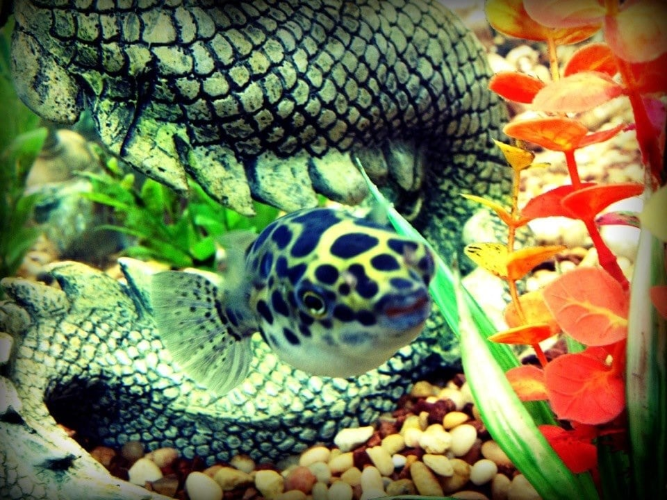phoenix tropical fish local fish stores phoenix az