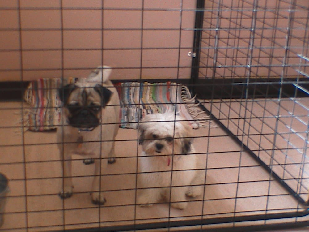affordable pet boarding 10 photos pet boarding pet With affordable dog boarding