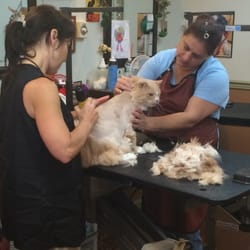 Just 4 paws pet spa lyndhurst nj united states yelp for 4 paws pet salon