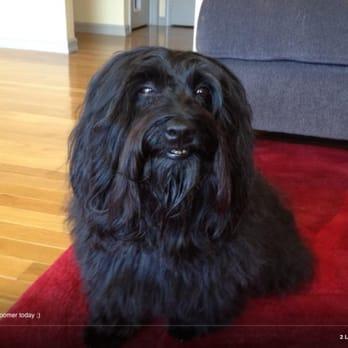 Dog Grooming Pinole