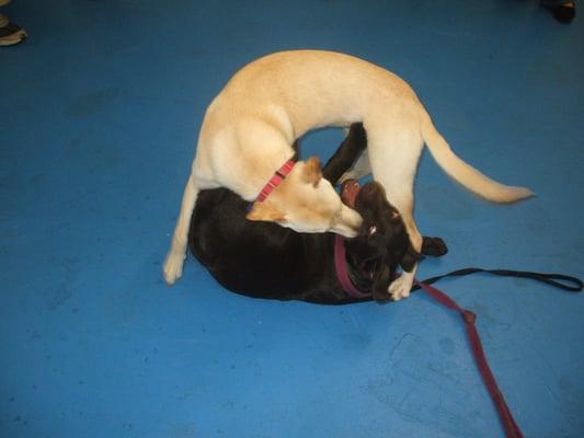 Dog Training Towson