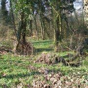Der Auwaldboden ist fast ganz mit…