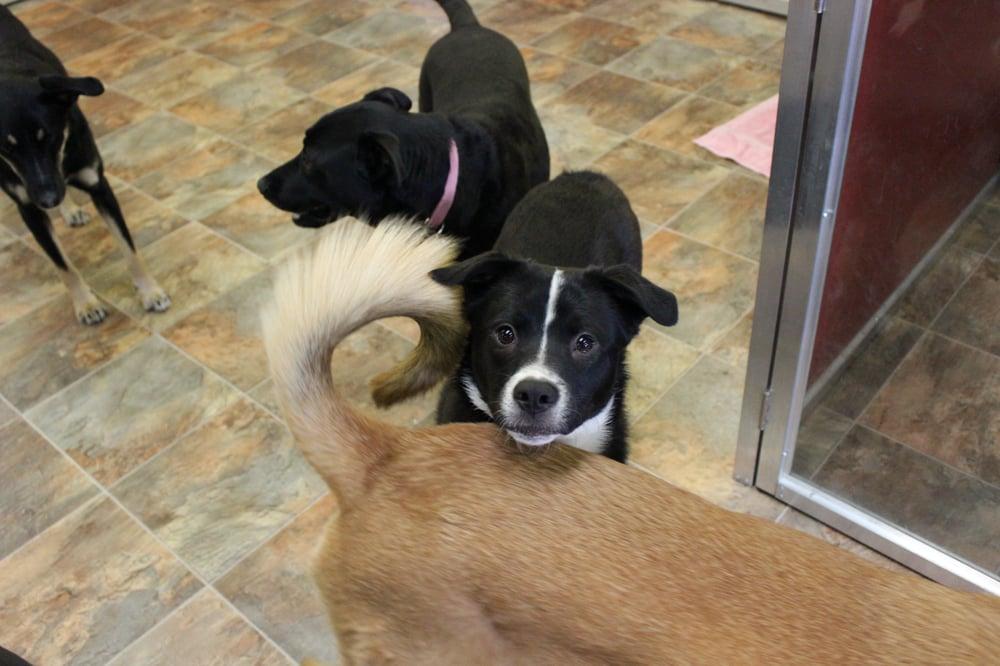 Doggie daycare near Denver | Yelp