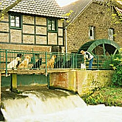 Sindorfer mühle hundepension