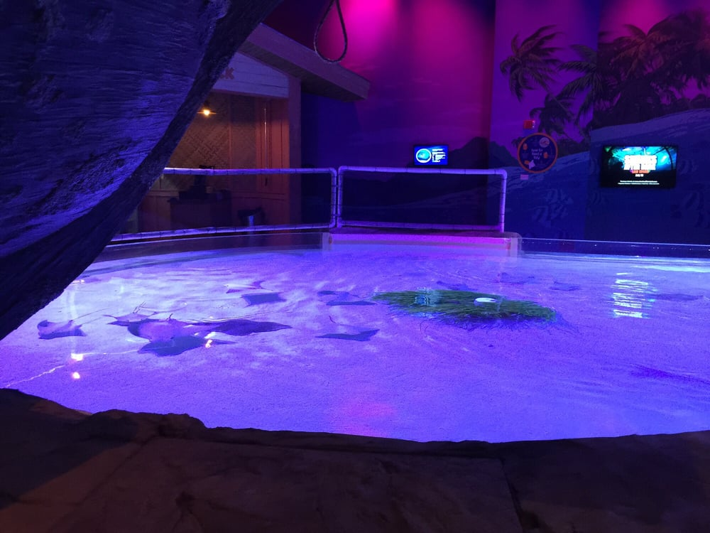 sea life minnesota aquarium 99 fotos aquarium 120 e. Black Bedroom Furniture Sets. Home Design Ideas