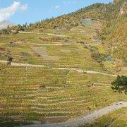 Höchster Weinberg Europas, Visperterminen, Valais, Switzerland