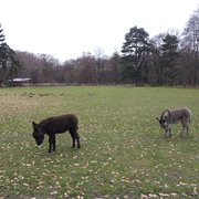 Lindenthaler Tierpark, Cologne, Nordrhein-Westfalen, Germany