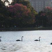 parque do Ibirapuera, encantador!!
