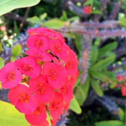 Self Realization Fellowship Hermitage Meditation Gardens Encinitas Ca United States One