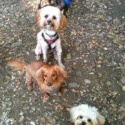 Piedmont Pet - Riley, Pele, Dexter & Jasper - Oakland, CA, Vereinigte Staaten