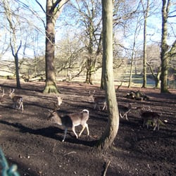 Private deer park at Bentley Priory…