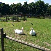 Animals enjoying London sun