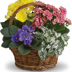 Treeland Florists & Greenhouses - Spring Has Sprung Mixed Basket - New Bedford, MA, Vereinigte Staaten
