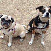 Piedmont Pet - Ting Li & Daisy - Oakland, CA, Vereinigte Staaten