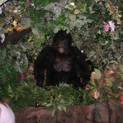 Rainforest Cafe Reviews San Antonio