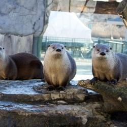 The Living Planet Aquarium Trasladado Sandy Sandy
