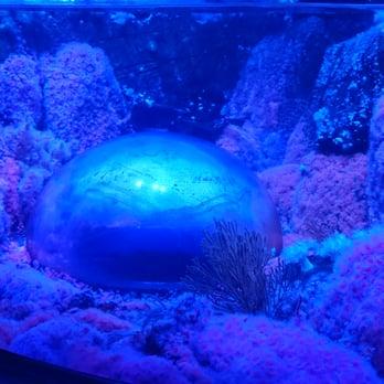 Sea Life Aquarium 487 Photos Aquariums Carlsbad