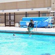 Christopher high school aquatics center swimming pools - Public swimming pools tri cities wa ...