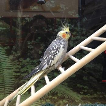 Parakeets Won T Eat Fresh Food