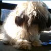 Aussie Pet Mobile Garland: Dog Grooming