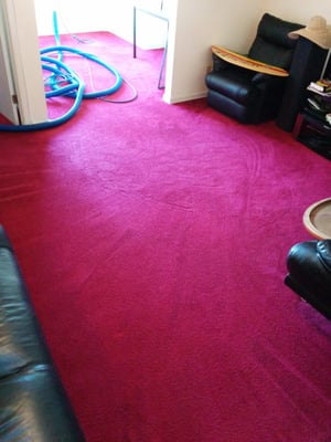 Xavier Cleaning Service - Carpet Cleaning - San Francisco ...