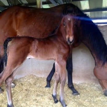 Ann Miller equestrian