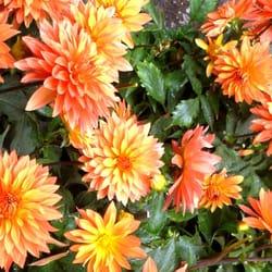 flower-dreams, Berlin