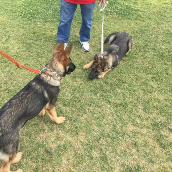 Wolfgang Dog Training Gardena