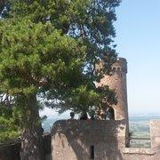 Nochmal der 300-jährige Baum auf der…