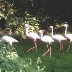 affen vogelpark eckenhagen zoo am bromberg 6 reichshof nordrhein westfalen beitr ge. Black Bedroom Furniture Sets. Home Design Ideas
