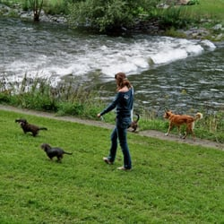 hunde lieben die wege der wiese entlang!…