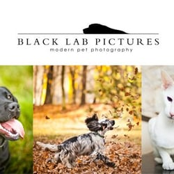 Modern pet photography in London