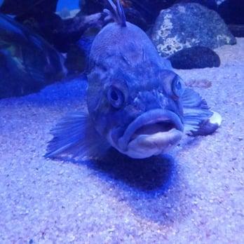 Downtown Aquarium 247 Photos Aquariums Northwest