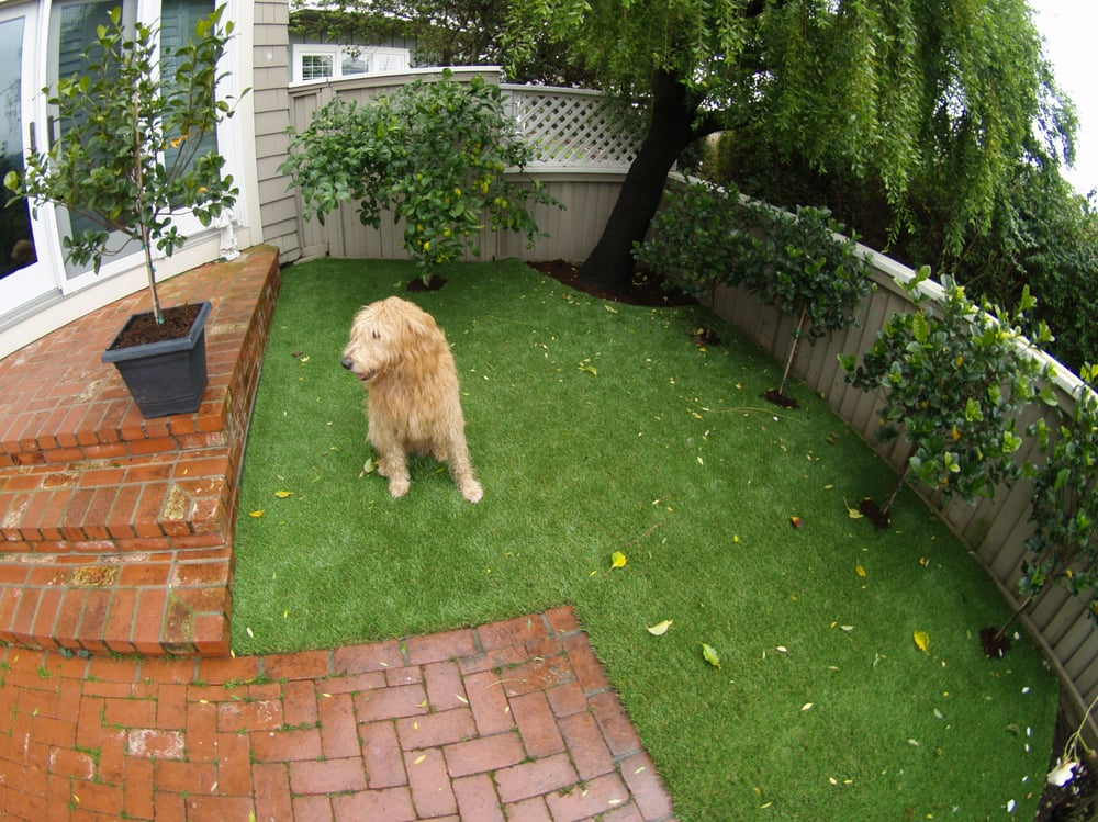 Fake Grass For My Backyard :  Artificial turf for a dog run area installed in a backyard in the