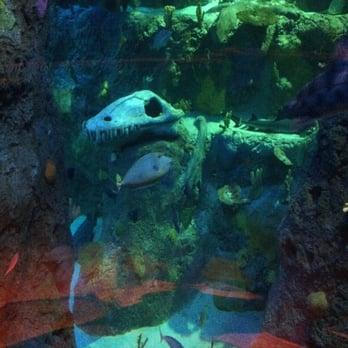 sea life aquarium 117 photos 85 reviews aquariums 3000 grapevine mills parkway. Black Bedroom Furniture Sets. Home Design Ideas
