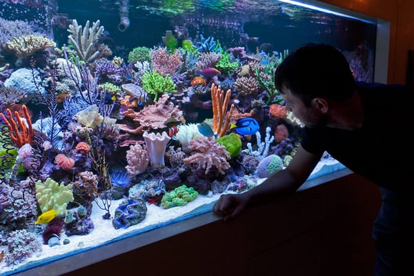 Saltwater aquarium near me reef aquariums for saltwater for Saltwater fish for sale near me