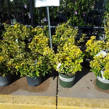 Johnson S Garden Centers Nurseries Gardening Wichita Ks Reviews Photos Yelp