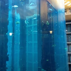View of the aquarium from the elevator…