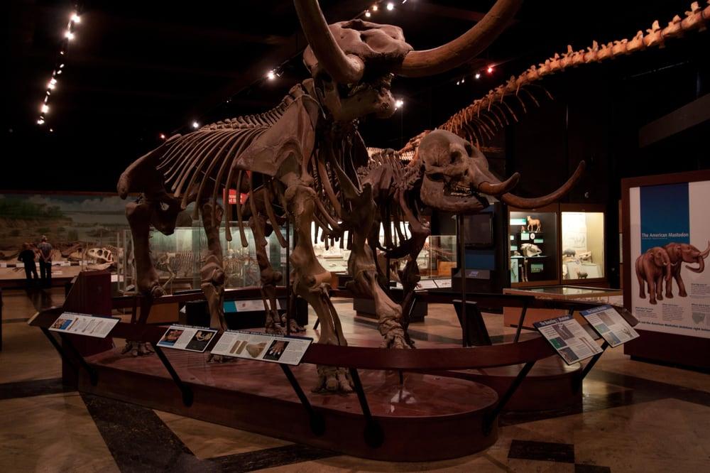 University Of Michigan Museum Of Natural History Ann Arbor Mi