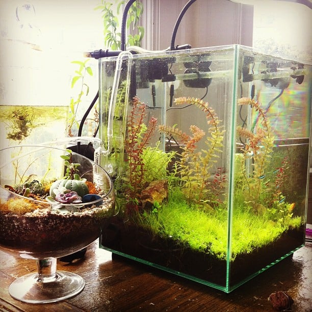 Customer Tank In San Francisco Apartment Round Our Your