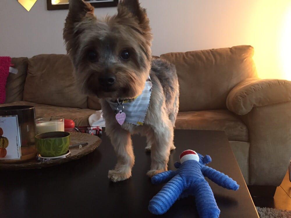 Dog Grooming Charlotte Nc