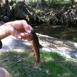 Yosemite fly fishing 10 photos tours el portal ca for Fly fishing yosemite