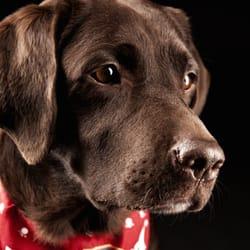 Portraits von Ihrem Haustier!