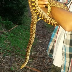 "Tilden Regional Park - Berkeley, CA, États-Unis. The snake named "" friendly"" that we met on our hiking adventure"