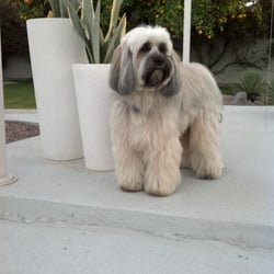 Uptown Dog Grooming Palm Desert Ca