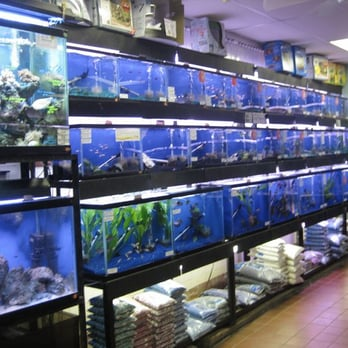 Pet fish store nyc chile and was delighted to discover for Fish and pet store