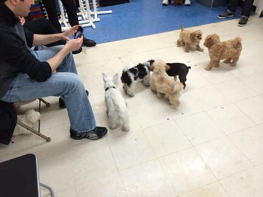 Andrea Arden Dog Training New York Ny