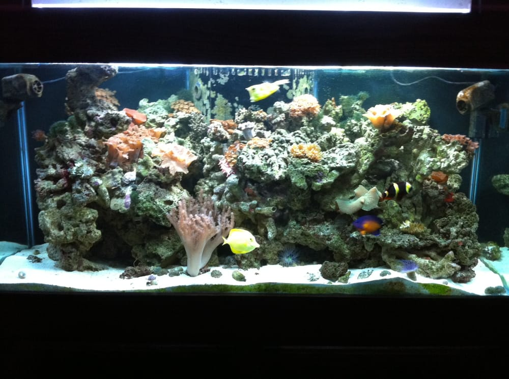 Aquarium store san diego fountains aquarium tropical for Fish store san francisco