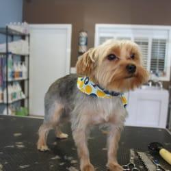 Lucky paws pet salon pet groomers federal way wa for 4 paws pet salon