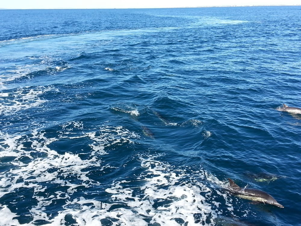 Photos for newport landing whale watching and sportfishing for Newport landing fish report